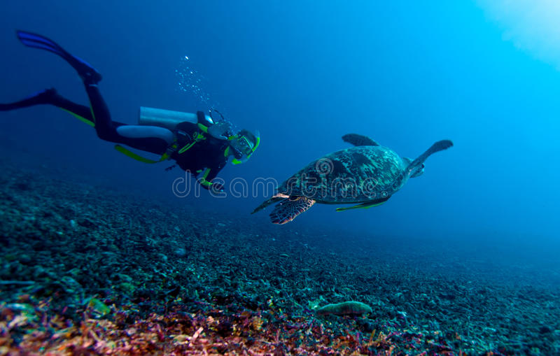 Tortuga verde y zambullidor, Lombok, Indonesia foto de archivo