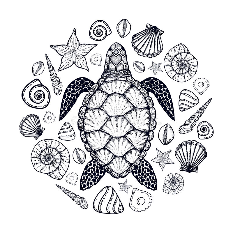Tortuga y cáscaras de mar en la línea estilo del arte Ilustración drenada mano del vector Sistema de elementos del océano stock de ilustración