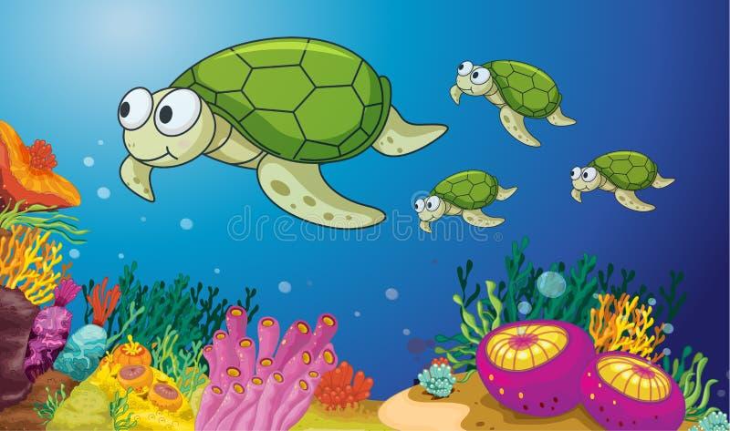 Tortugas ilustración del vector