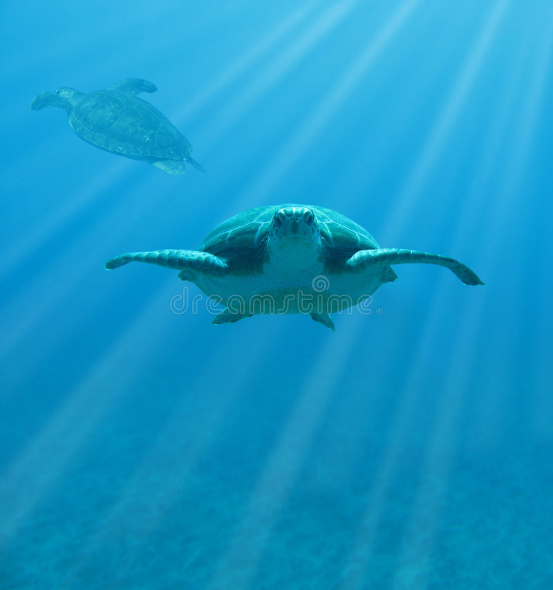 tortugas de la Halcón-cuenta imágenes de archivo libres de regalías