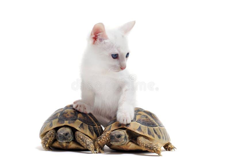 Tortugas y gato jovenes imagenes de archivo