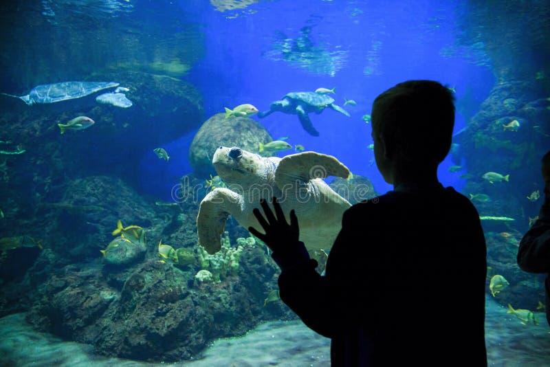 Tortugas y pescados de observación de mar del niño en un acuario grande fotos de archivo libres de regalías