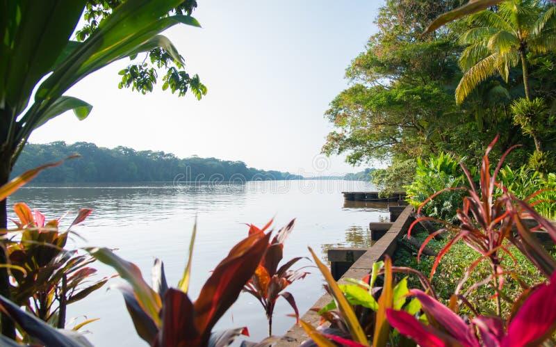 Tortuguero canal. S and jungle, Costa Rica stock image