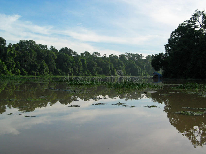 Tortuguero. Canals and jungle, Costa Rica royalty free stock images