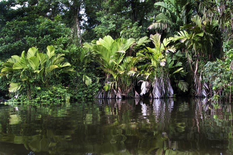 Tortuguero river. Tortuguero national park Costa Rica, riverside view on jungles royalty free stock photo