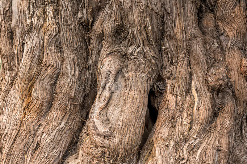 The trunk of a tree in close-up stock images