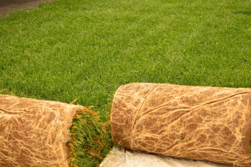Torvagräsmark arkivfoton