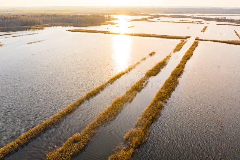 Torvland täckte i vattenlandskap Soligt landskap i bygd royaltyfri fotografi