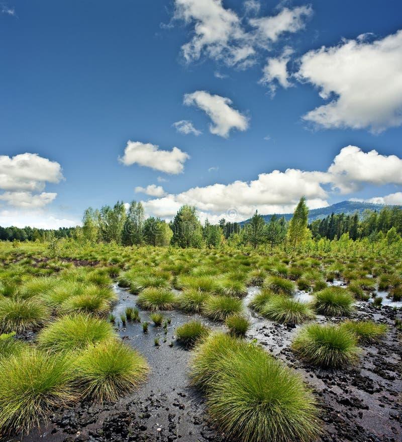 Torvmyrliggande - nationalparken Sumava Eur royaltyfria bilder