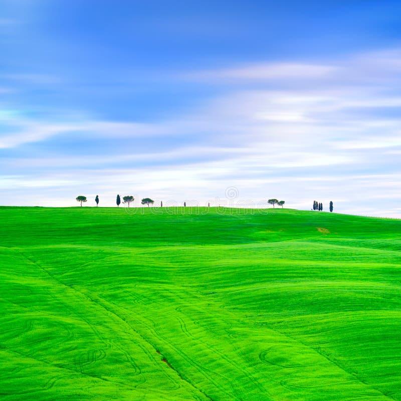 Toscânia, árvores de cipreste e campos verdes. San Quirico Orcia, Itália. imagem de stock