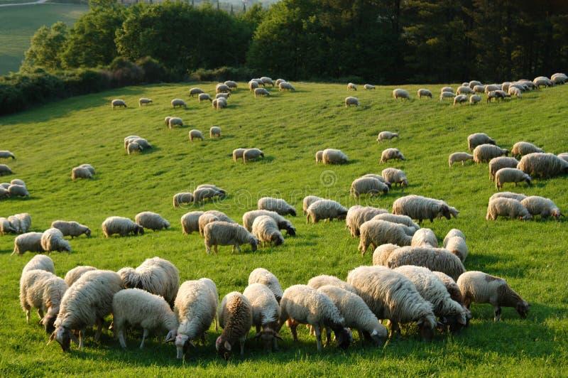 Toscânia rural foto de stock