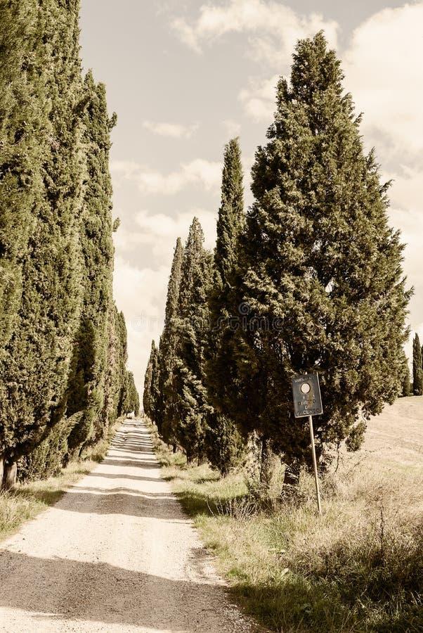 Toscânia - uma estrada ou um Strada alinhado Cypress típico Bianca imagem de stock