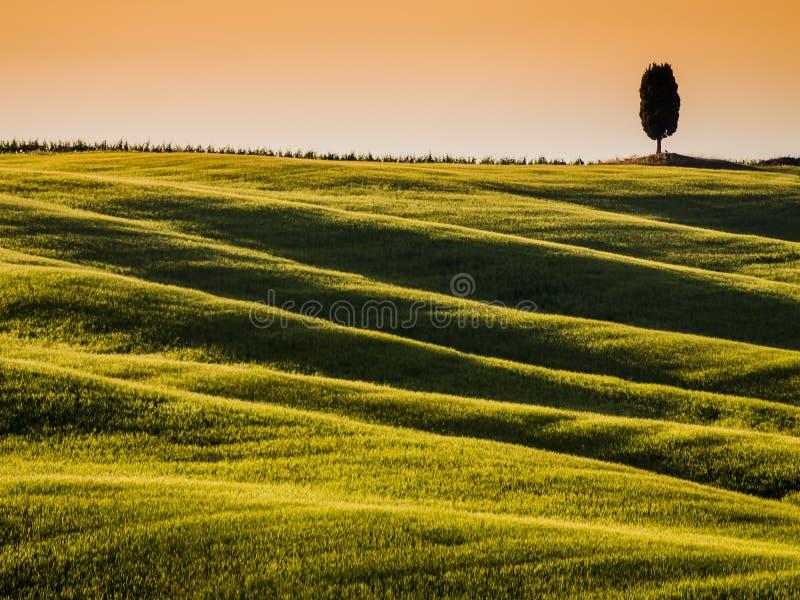 Toscaans landschap bij schemer, met rollende heuvels en cipresboom op achtergrond royalty-vrije stock fotografie