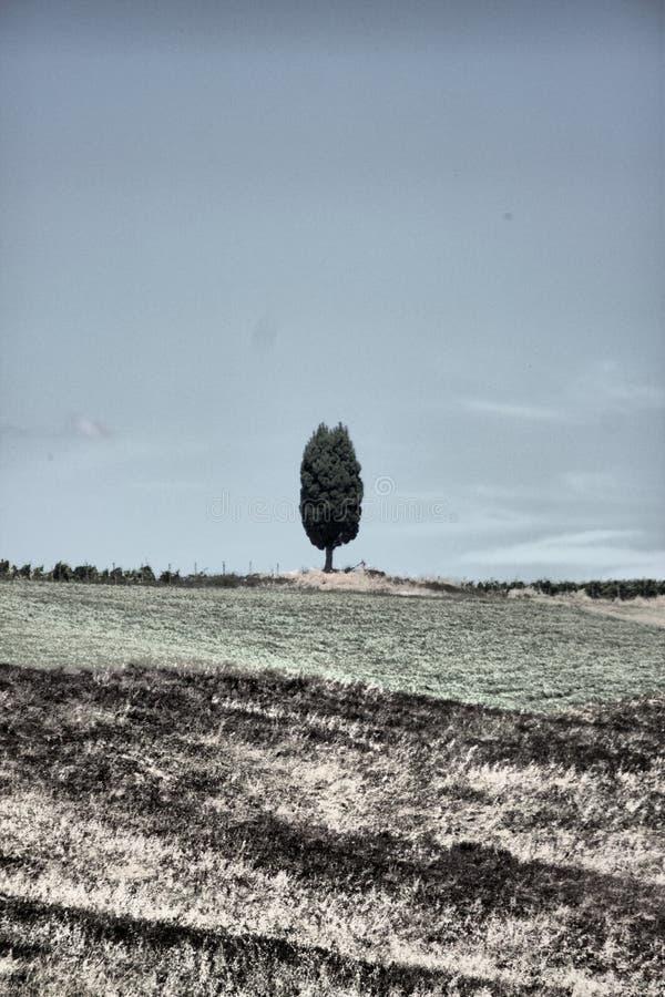 Toscaans landschap met cipresboom royalty-vrije stock afbeelding