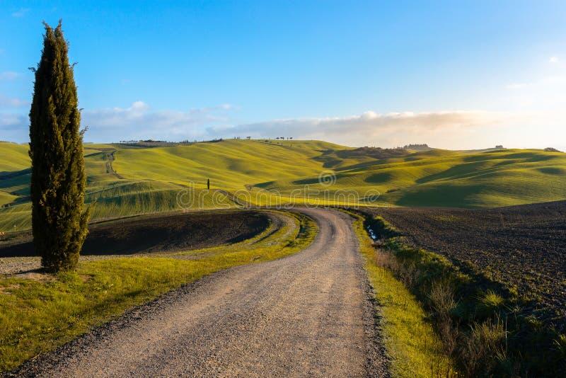 Toscaans landschap met groene rollende heuvels en cipresbomen, Italië stock afbeeldingen