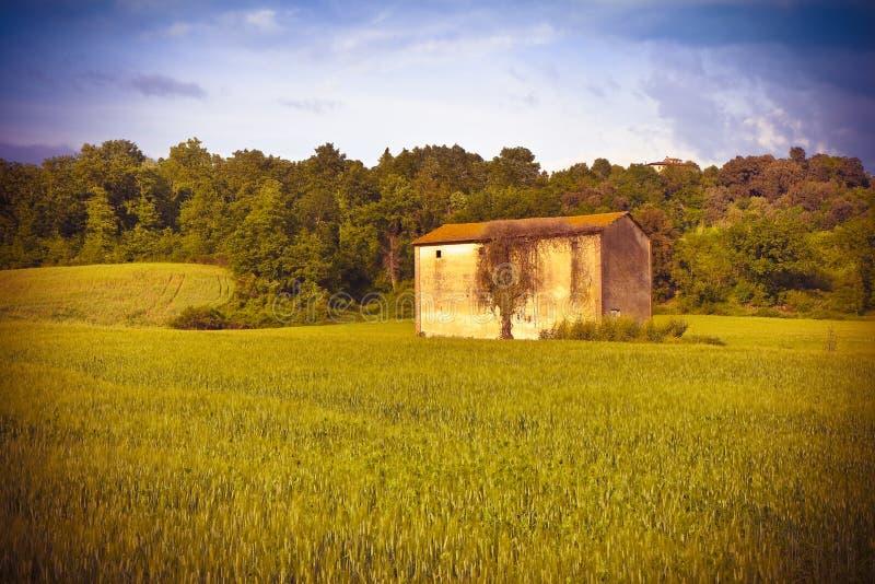 Toscaans platteland met cornfield in de voorgrond Italië - aan royalty-vrije stock foto's