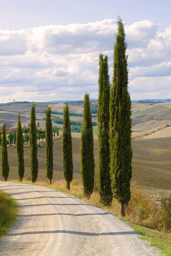 Toscaanse cipressen bij het wisselen van het wegclose-up Italië royalty-vrije stock fotografie