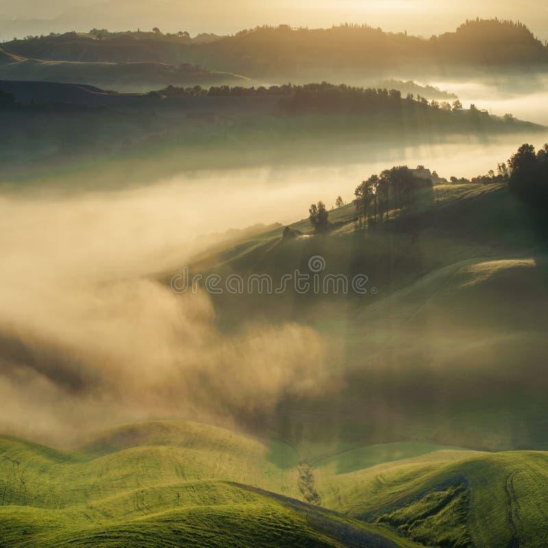 Toscaanse die gebieden in mist, Italië worden verpakt royalty-vrije stock afbeeldingen