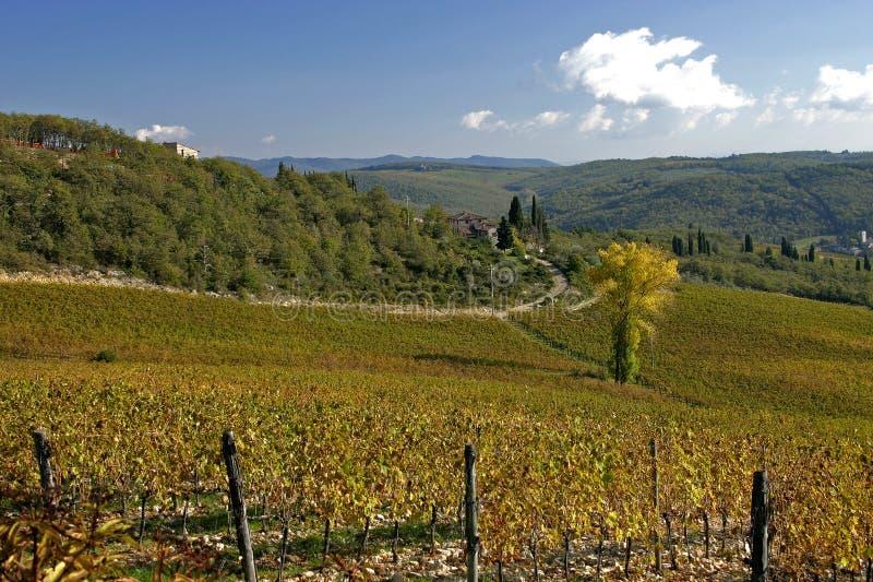 Toscaanse Wijngaard stock afbeelding