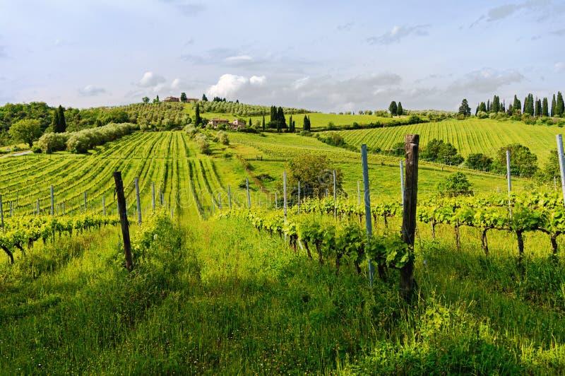 Toscaanse wijngaarden in een zonnige ochtend stock afbeelding