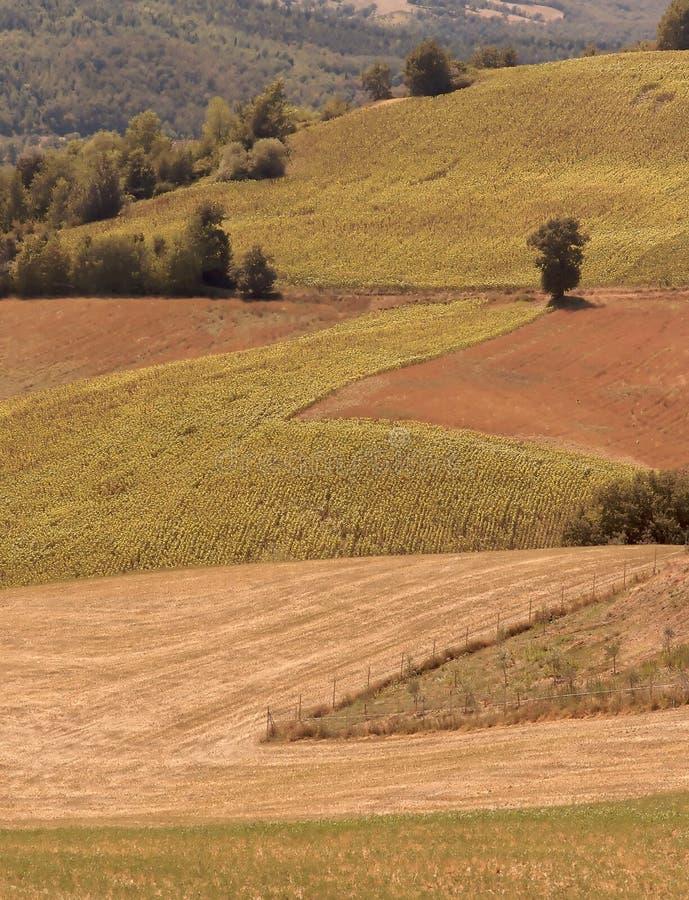 Toscana 1 imagenes de archivo