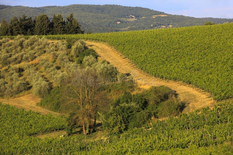 Toscana royaltyfria bilder