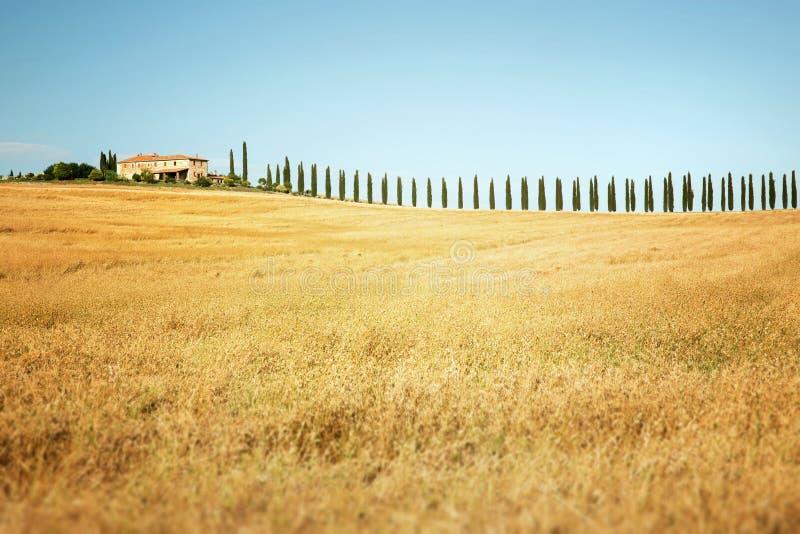 Download Toscana imagen de archivo. Imagen de fondo, ambiente - 41916357
