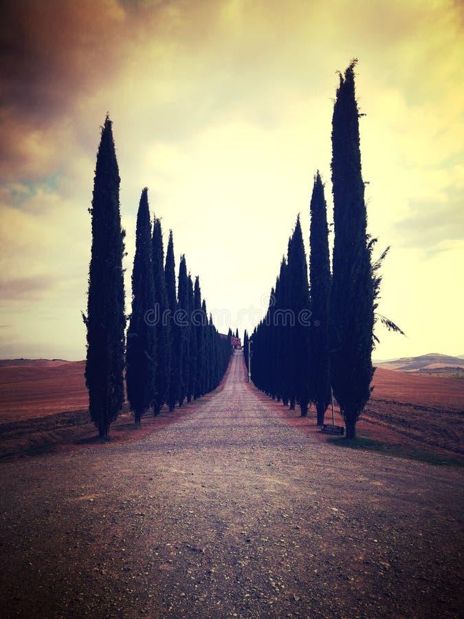 Trees. Toscana italy nature street royalty free stock photo