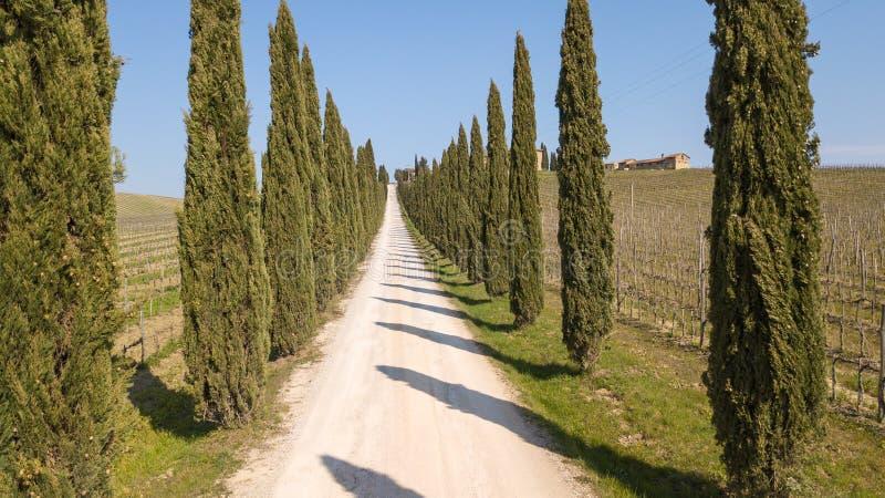 Toscana, paisaje aéreo de una avenida del ciprés cerca de los viñedos fotografía de archivo libre de regalías