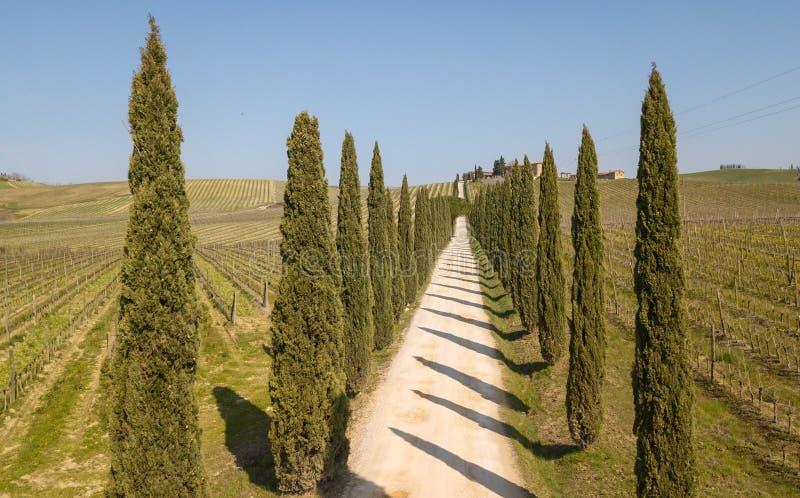 Toscana, paisaje aéreo de una avenida del ciprés cerca de los viñedos fotos de archivo libres de regalías