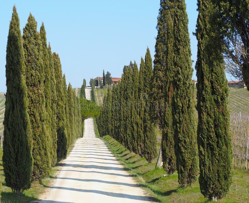 Toscana, paisaje de una avenida del ciprés cerca de los viñedos imagen de archivo
