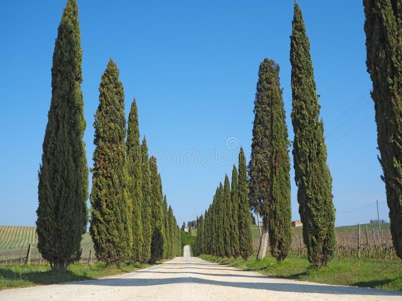 Toscana, paisaje de una avenida del ciprés cerca de los viñedos imágenes de archivo libres de regalías