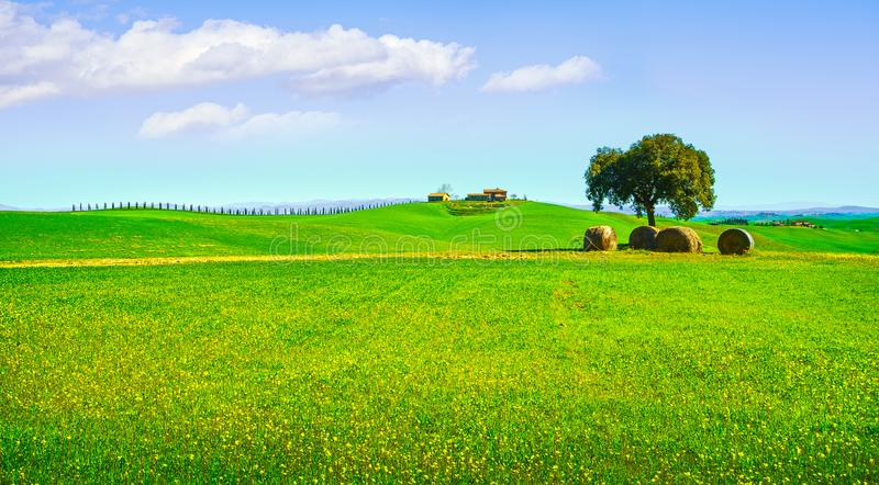 Toscana, paisaje rural Árbol, rollos del heno y fileds verdes ital fotos de archivo libres de regalías