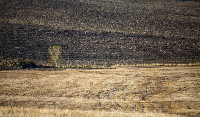 Toscana - panorama, colinas y prado del paisaje foto de archivo