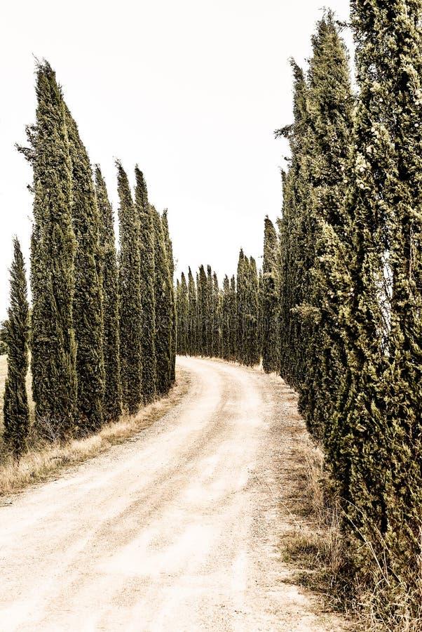 Toscana - Strada típico Bianca Near Asciano imagen de archivo libre de regalías