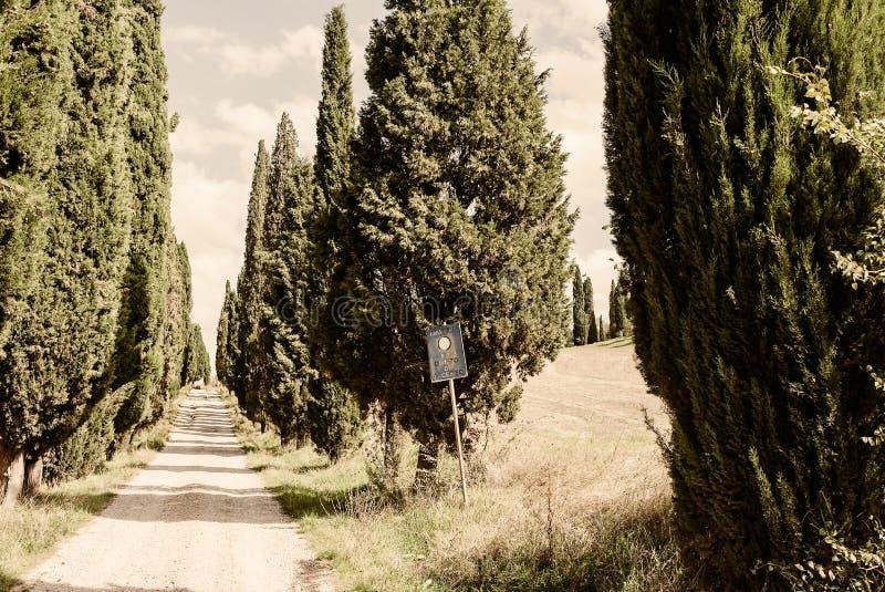 Toscana un camino o un Strada alineado Cypress típico Bianca imagen de archivo