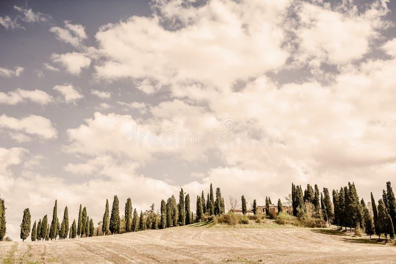 Toscana - un estado del país con un camino o un Strada alineado Cypress típico Bianca imagenes de archivo