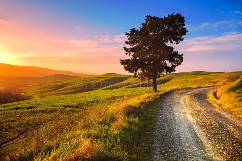Toscanië, eenzame boom en landelijke weg op zonsondergang Volterra, Italië stock afbeelding