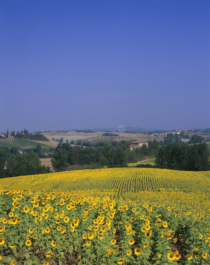 Toscanië, Italië royalty-vrije stock foto's