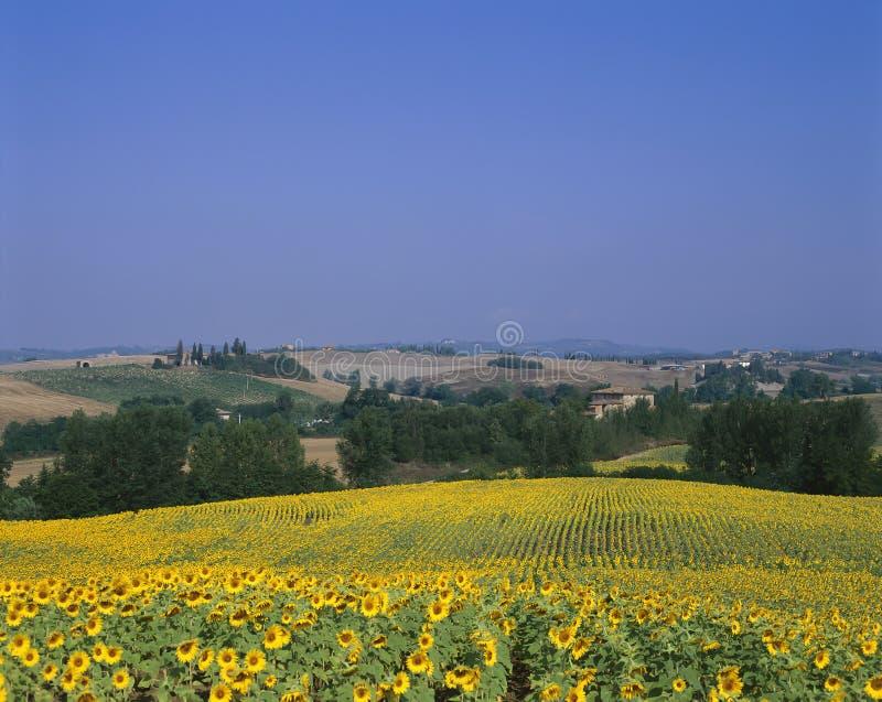 Toscanië Italië royalty-vrije stock fotografie