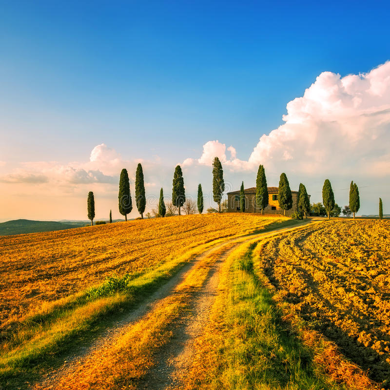 Toscanië, landbouwgrond, cipresbomen en witte weg op zonsondergang Siena stock foto's