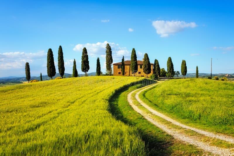 Toscanië, landbouwgrond, cipresbomen en witte weg op zonsondergang Siena stock afbeelding