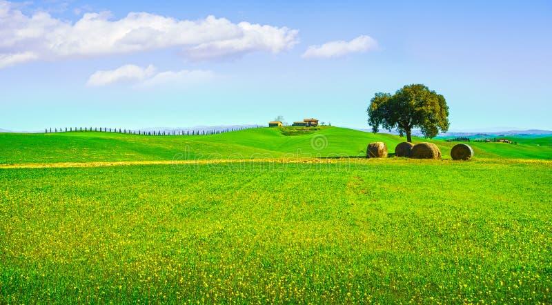 Toscanië, landelijk landschap Boom, hooibroodjes en groene fileds ital royalty-vrije stock foto's
