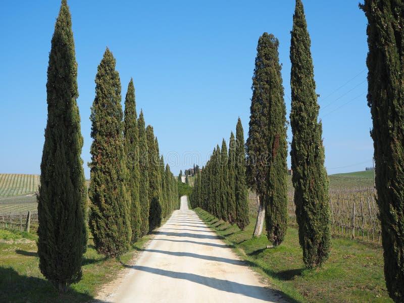 Toscanië, landschap van een cipresweg dichtbij de wijngaarden stock afbeeldingen