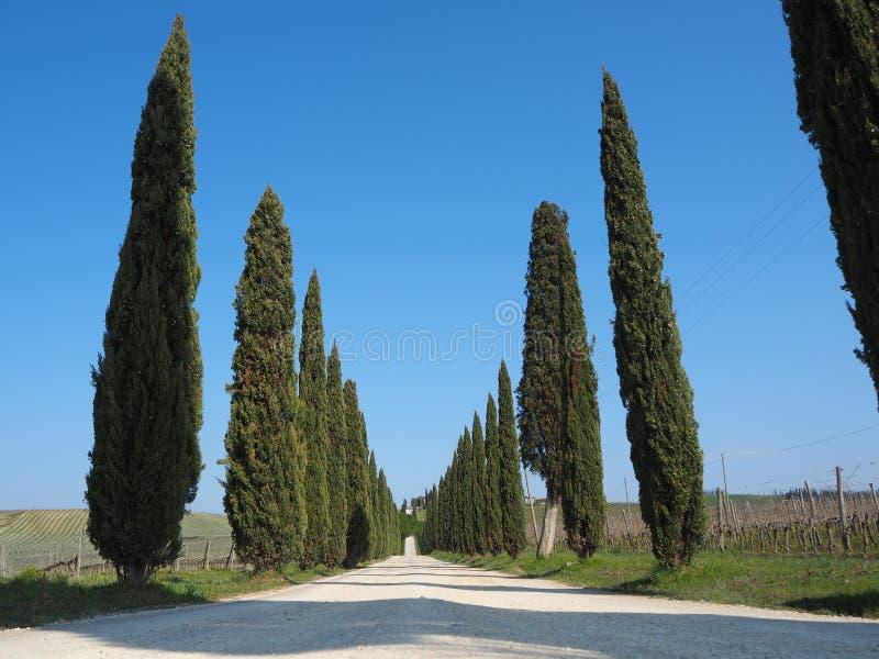 Toscanië, landschap van een cipresweg dichtbij de wijngaarden royalty-vrije stock afbeelding