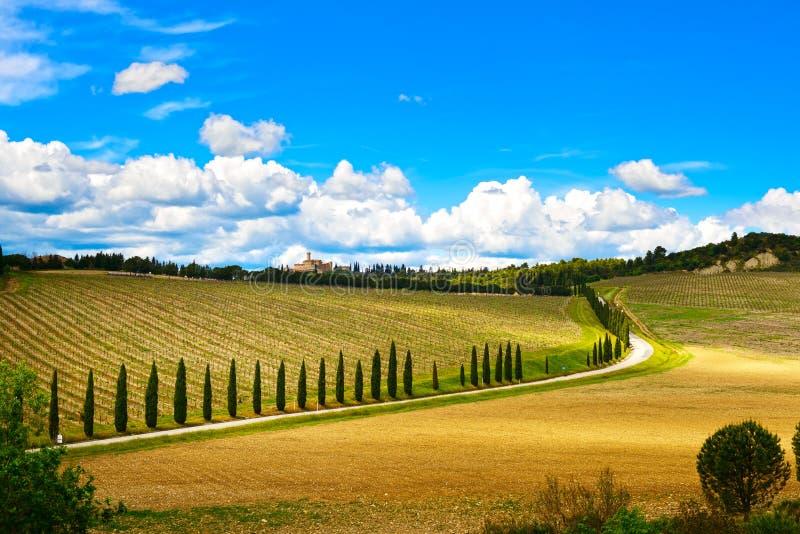 Toscanië, wijngaard, cipresbomen en weg, landelijk landschap, Ital stock foto