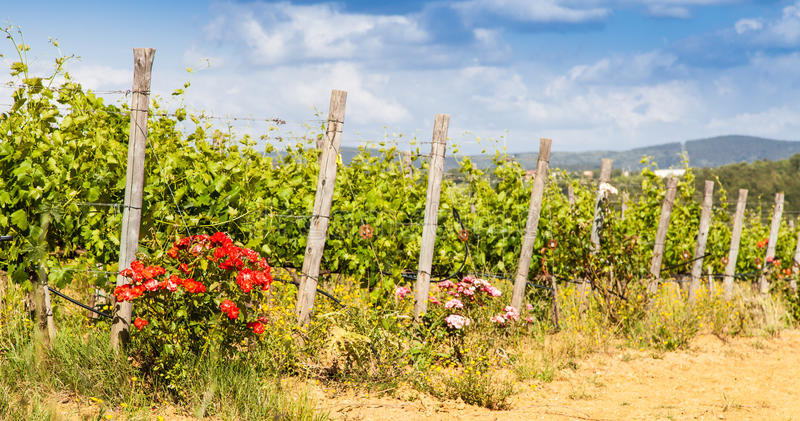 Toscanië Wineyard stock fotografie