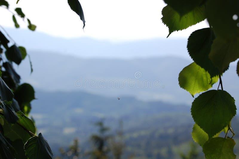 Toscano панорамы стоковая фотография rf