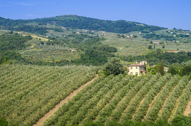 Toskańska wieś z winnicami, drzewami oliwnymi, drewnami, gospodarstwami rolnymi i miasteczkiem, zdjęcie royalty free