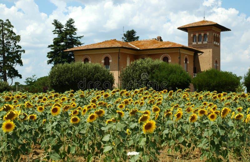 Toskana-Bauernhof und Sonnenblumen lizenzfreies stockfoto